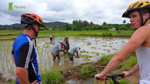 Biking and rice paddies